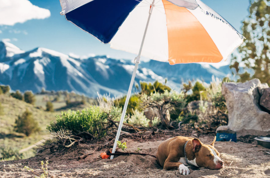 Dog under the big umbrella